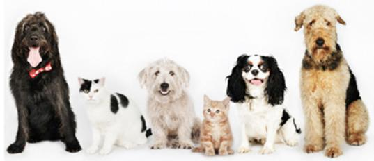group picture of groomed dogs